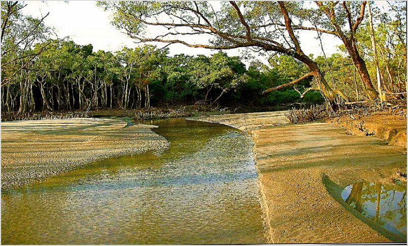 Sundarban