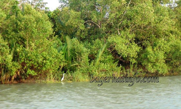 SundorBon-Beauty-of-Bangladesh-2