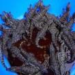 সুন্দরবনের বন্যপ্রাণী প্রজনন কেন্দ্রর ৪৩টি কুমির ছানা উধাও