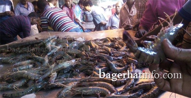 Bagda-Chingri-Pic-3