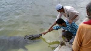 Crocodil-at-Khanjan-Dhigi