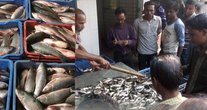 Fish-PIc-at-BarakPur02