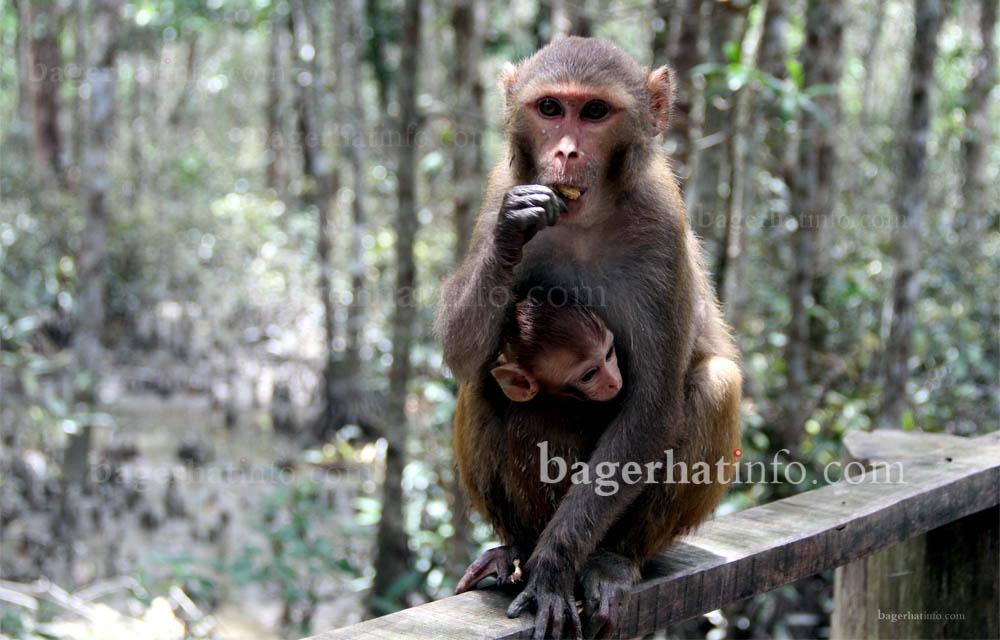 karamjal-Sundarban-Pic