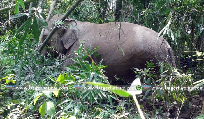 Bagerhat-Pic-1(23-05-2015)Elephant