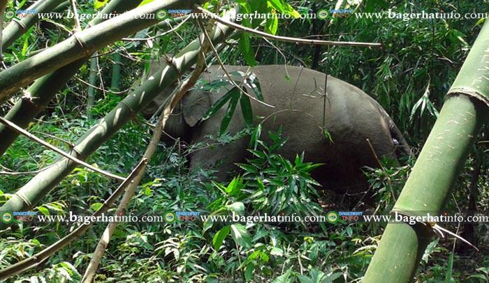 Bagerhat-Pic-2(23-05-2015)Elephant