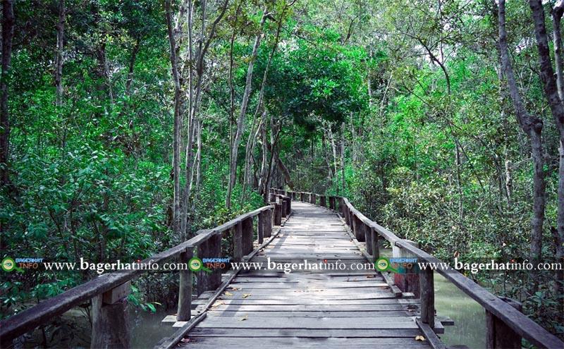 karamjal-Sundarban-Pic-003
