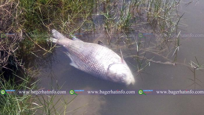 Bagerhat-Salinity-Heat-Fish-Death-pic-(08-06-2015)