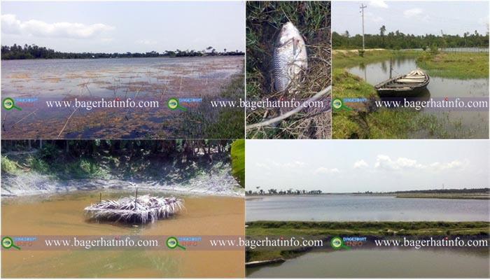 Bagerhat-Salinity-Heat-Fish-Death-pic-2(08-06-2015)