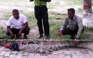 Crocodile-04-06-2015