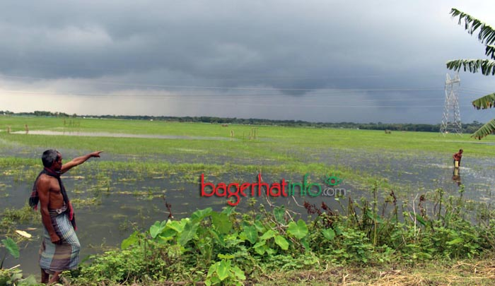Bagerhat-Agricultur-Pic-1