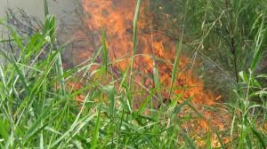 Fire-in-sundorbon-pic