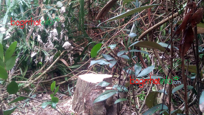 SundorBon-Fire-tree-Cuting-5