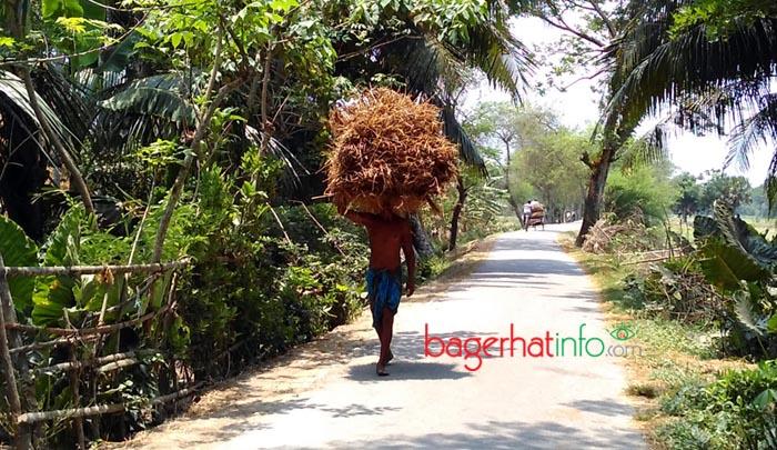 Bagerhat-Pic-4(01-05-2016)Rice