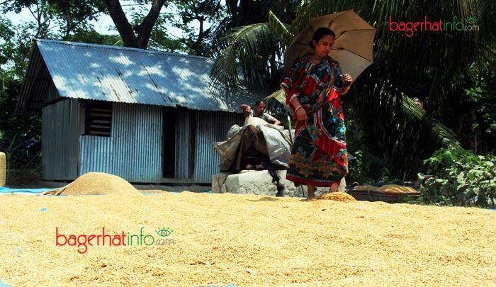 Bagerhat-Pic-5(01-05-2016)Rice-Procising