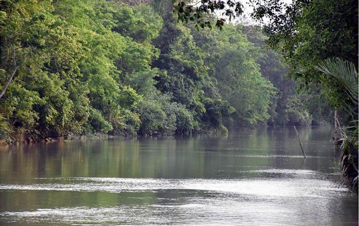 সুন্দরবনে র্যাবের 'বন্দুকযুদ্ধে' সন্দেহভাজন দস্যু নিহত